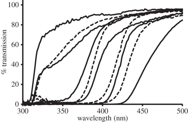 Figure 2. Average spectral transmission curves at short wavelengths of the lenses of 10 representative mammalian species. From left to right, each curve indicates transmission of  young black rats, cat, okapi, cattle, rabbit, Arabian oryx, squirrel monkey, Alaotran gentle lemur, adult meerkat, and prairie dog. (Originally Figure 3 from Douglas and Jeffrey, 2014, http://rspb.royalsocietypublishing.org/content/281/1780/20132995/F3.expansion.html)